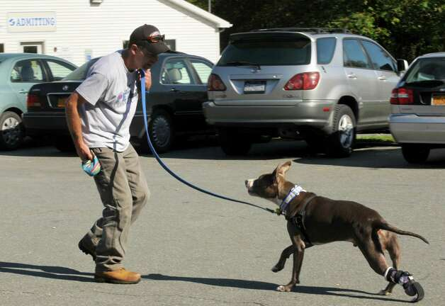 Richard Nash, left, walks with his dog Hudson as he trys out his new prosthetic paw at the Mohawk Hudson Humane Society on Saturday Oct. 12, 2013 in Menands, N.Y. Derrick Campana of Animal Orthocare LLC of Virginia fits Hudson with his newest prosthetic paw. Dr. Tom Bowersox a board certified veterinary surgeon who has worked with the railroad puppies over the past year, contacted Animal Orthocare to see if they could provide a new prosthetic and help Hudson adjust to a new a€œadulta€ size paw. Campana showed  Dr. Bowersox and owner Richard Nash how to work with Hudson to help walk and run with the new paw and to help him strengthens and straighten his a€œgooda€ leg. (Michael P. Farrell/Times Union) Photo: Michael P. Farrell / 00024251A