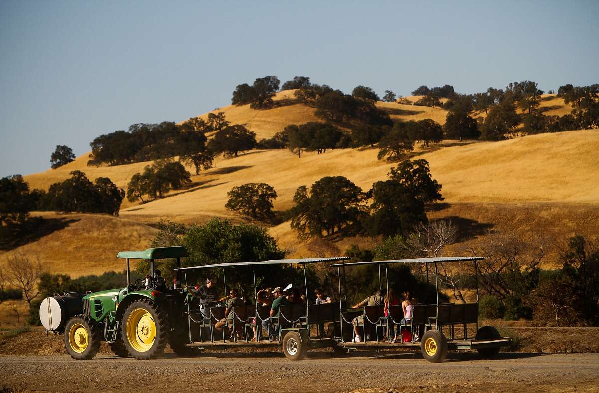 Tractor rides tour the farm at the Capay Crush event put on by Farm Fresh to You and Capay Organic in Capay, Calif., on Sunday, September 20, 2015.