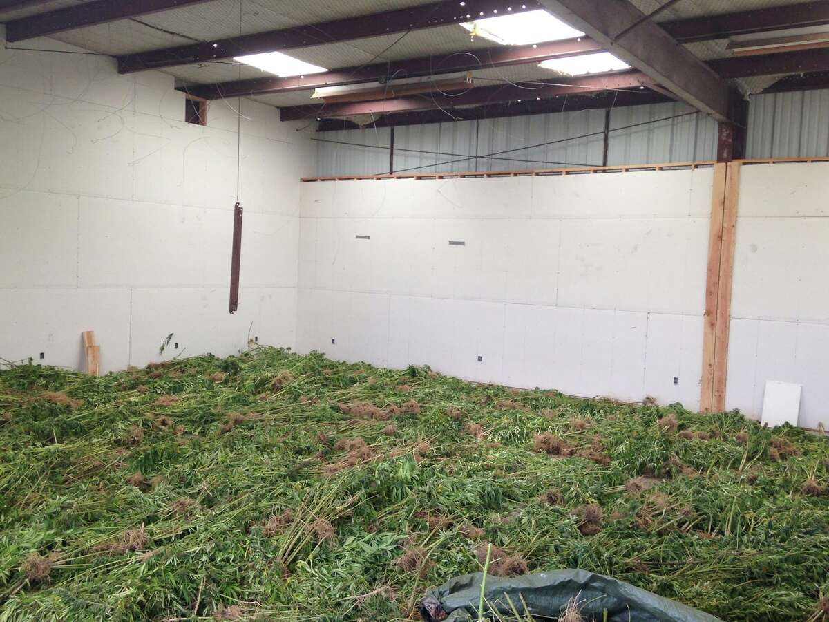 Sept. 16, 2015 - Investigators with the Hamilton County Sheriff's Office found about 5,000 marijuana plants growing in two separate locations in northern Hamilton County. Scroll through the slideshow to see what crazy crimes are going on in small town Texas via the Hamilton County Sheriff's Facebook page.