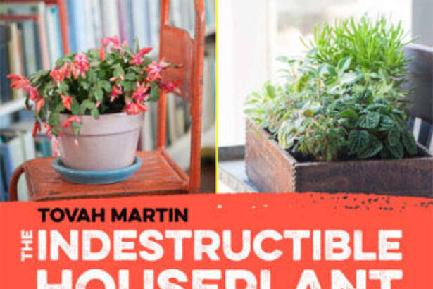 "Tovah Martin will discuss her new book, ""The Indestructible Houseplant: 200 Beautiful, Easy-Care Plants that Everyone Can Grow,"" Saturday at 1 p.m. at Minor Memorial Library in Roxbury."