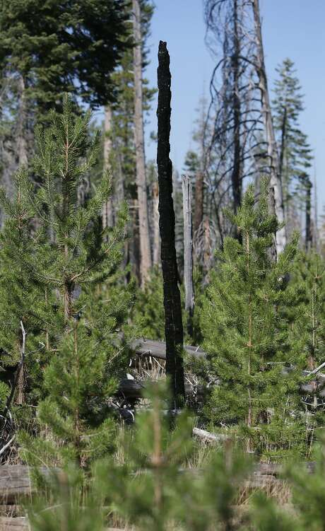 the benefits of forest fires on the environment Environmental consequences of forest fires can have different effects on the   an added benefit of plant removal is an increase in sunlight, which can assist in.