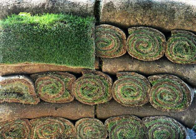 New sod from Brickman Landscaping in Schenectady ready for the SPAC grounds Thursday Sept. 24, 2015 in Saratoga Springs, NY. (John Carl D'Annibale / Times Union) Photo: John Carl D'Annibale / 10033498A