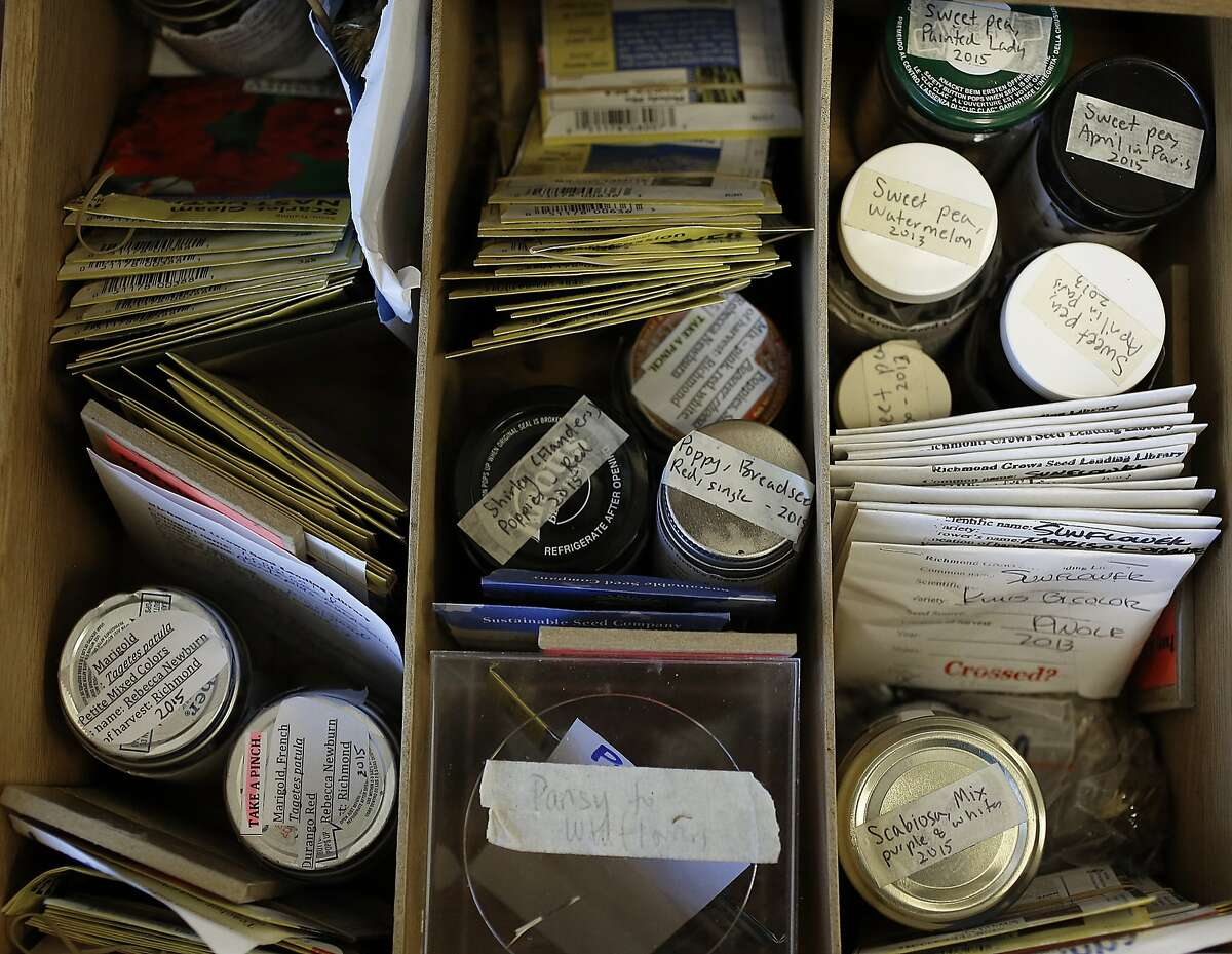 Seed conservator Rebecca Newburn shows her collection at the Richmond Public library main branch in Richmond, Calif., on Wednesday, September 23, 2015.