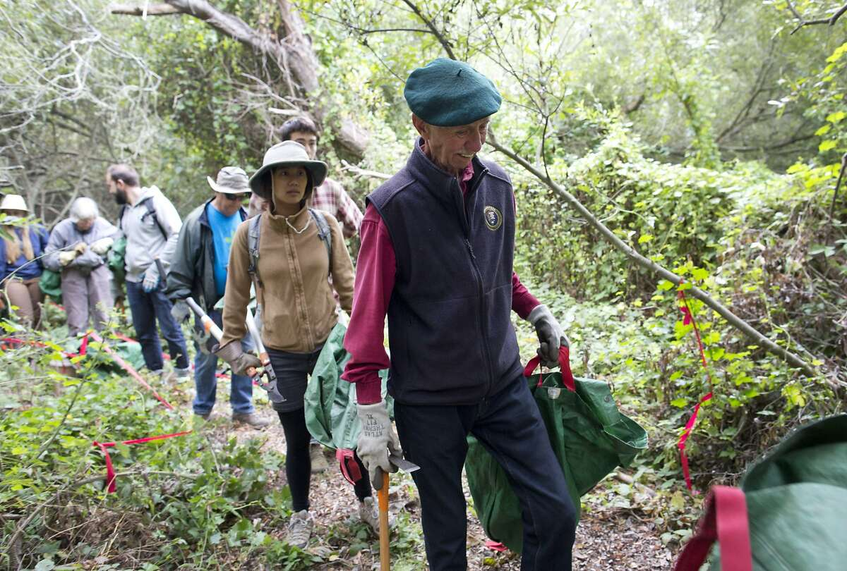 """Charlie Starbuck, 78, volunteers with the Presidio Park Stewards near the Lobos Creek headwaters in Presidio National Park on Wednesday, September 2, 2015 in San Francisco, Calif. """"I?•ve become kind of a restoration regular,"""" said Starbuck about his volunteer and conservation efforts."""