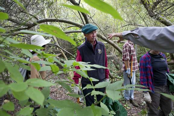 "Charlie Starbuck listens to instructions on where to weed near the Lobos Creek headwaters in Presidio National Park on Wednesday, September 2, 2015 in San Francisco, Calif. Starbuck volunteers three times a week in the Presidio. ""ItÕs now become such a part of my fabric of life that I think I would shrink up and melt away if I didnÕt have a chance to come out to the presidio every week,"" said Starbuck."