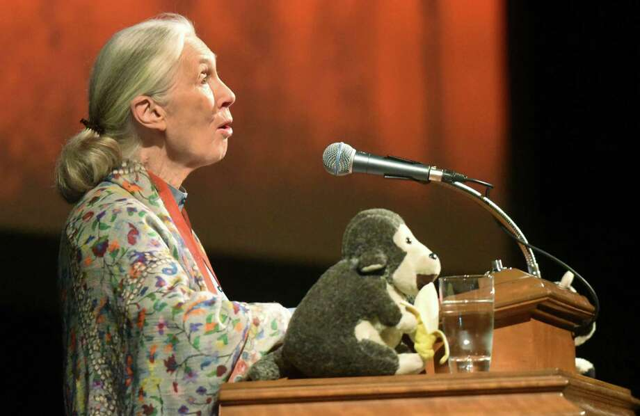 "Jane Goodall, renowned chimpanzee expert, greeted attendees of a lecture with a chimpanzee call at Trinity University's Laurie Auditorium. The lecture coincides with the release of the book ""The Jane Effect: Celebrating Jane Goodall."" Photo: Billy Calzada / San Antonio Express-News / San Antonio Express-News"