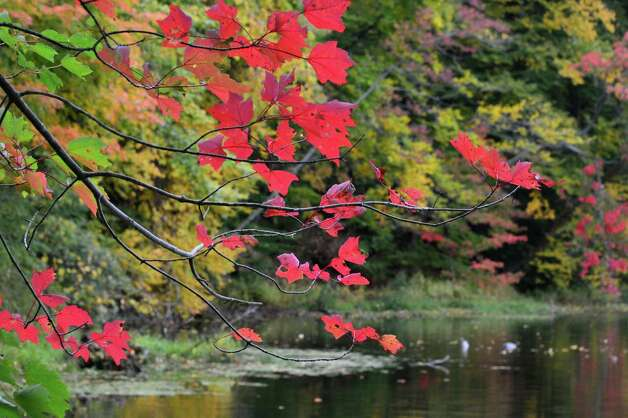 Bright fall foliage along a pond in Clifton Park Tuesday Oct. 2, 2012.  (John Carl D'Annibale / Times Union) Photo: John Carl D'Annibale