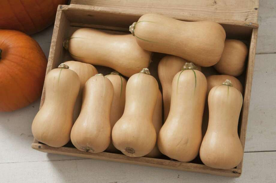 Photo courtesy of All-America Selections. Butternut squash