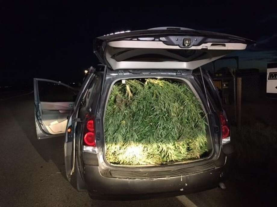 A van full of marijuana plants was pulled over early Monday, Sept. 28, in Pleasant Grove, Calif., according to the Sutter County Sheriff's Department. Photo: Leticia Ordaz, KCRA