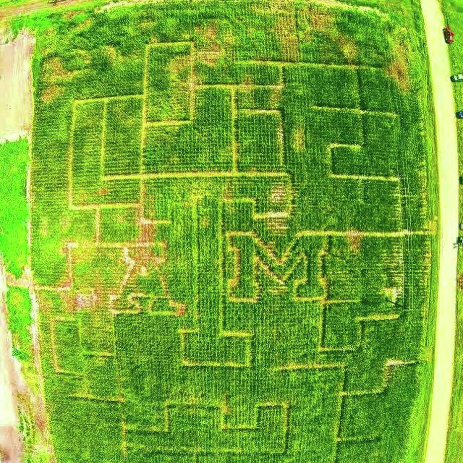 A four-acre cornfield planted in late July, 2015, at a Texas A&M research field in College Station reached heights up to about 7 feet by the end of September, tall enough to create the Texas A&M Agronomy Society's First Annual Corn Maze and Pumpkin Patch. Photo: Courtesy Of Texas A&M Agronomy Society