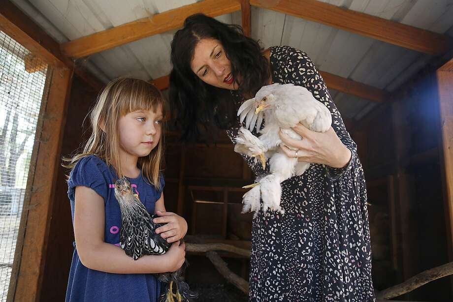 Rubyrose Johnson, 5, and her mother, Serafina Palandech of Hip Chick Farms, with a cochin chicken on their farm in Sebastopol. Palandech and her wife, Jen Johnson, produce a line of frozen chicken products using Mary's Chickens.  Photo: Liz Hafalia, The Chronicle