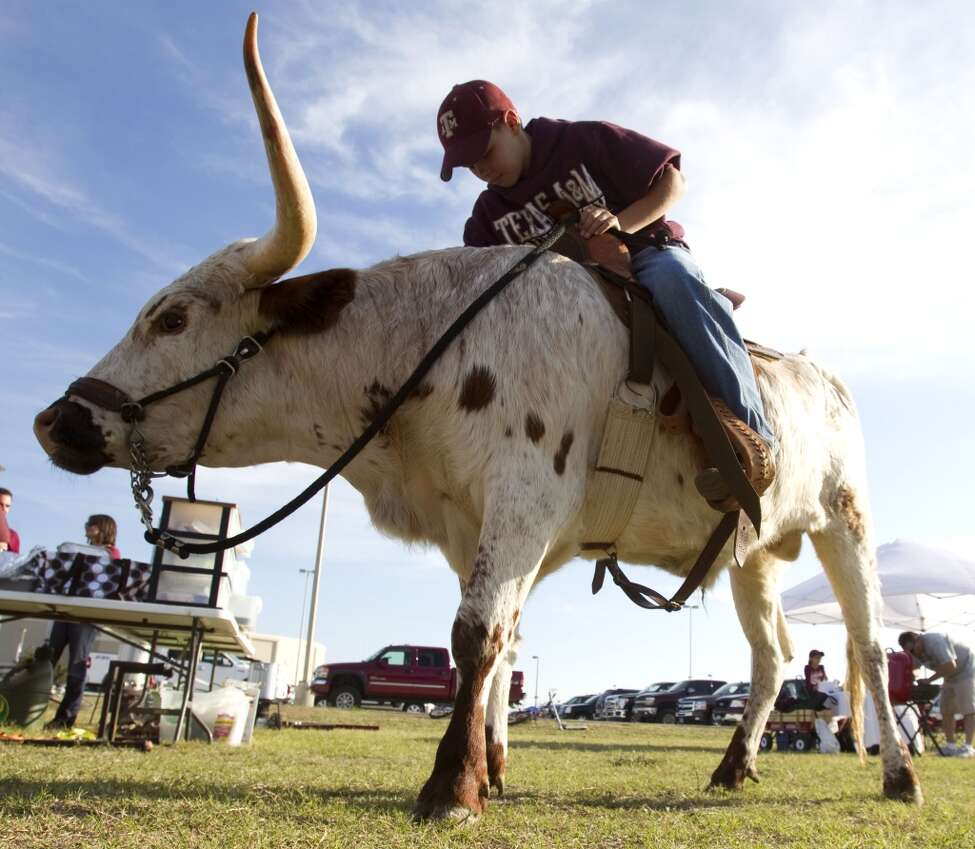 Texas A&M fan Roy Owens, 11, of Mexia, rides a longhorn before an NCAA college football game between Texas and Texas A&M at Kyle Field Thursday, Nov. 24, 2011, in College Station. ( Brett Coomer / Houston Chronicle )