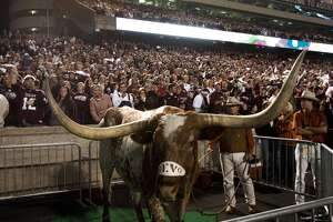 UT mascot Bevo dealing with 'life-threatening condition' - Photo