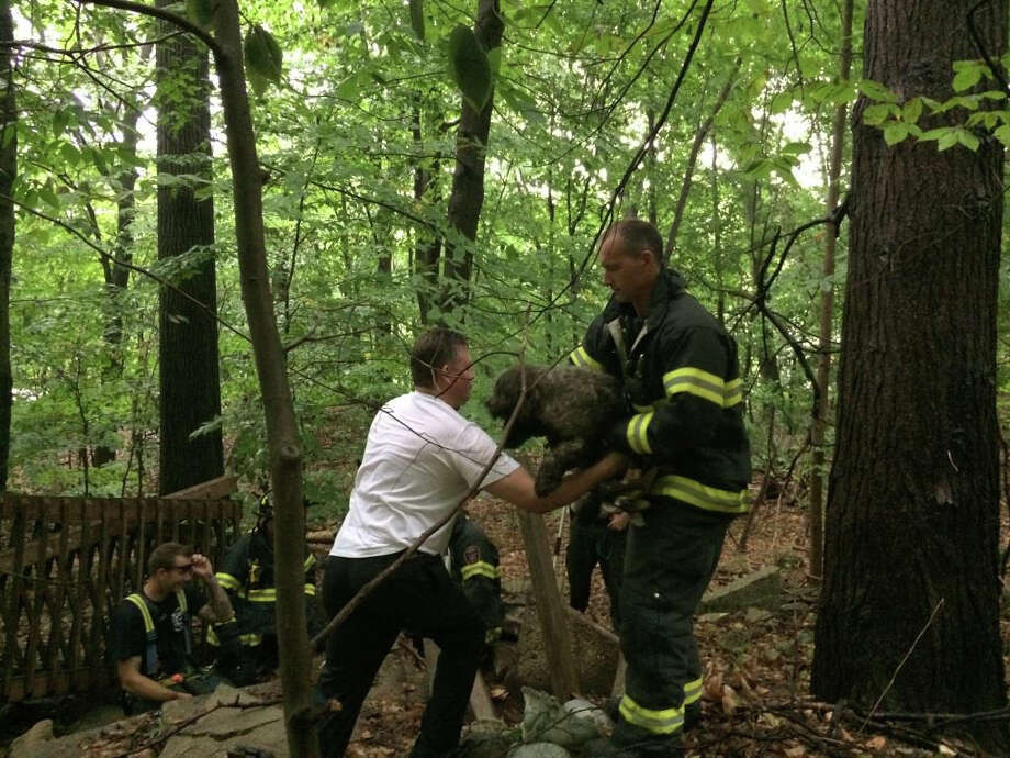 Firefighters rescued a dog trapped beneath a pile of broken concrete. Photo: Contributed Photo / Fairfield Citizen /  Fairfield Citizen contributed