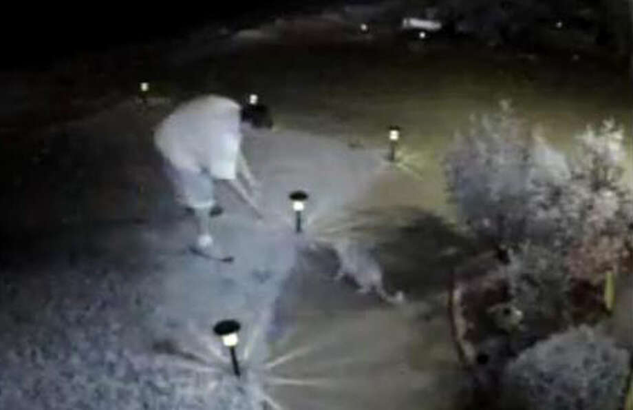 Surveillance video shows a cat being stolen from the yard of a house in San Jose. Photo: Facebook