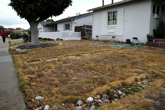 Dry lawns in front of the homes along Shannon Ave. in Dublin, Calif., on Thurs. October 1, 2015, have turned brown to conserve water during the drought.