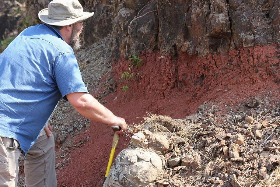 Paul Renne, director of the Berkeley Geochronology Center, inspects a reddened soil horizon called a red bole between lava flows. He co-led a team of scientists that determined the timing of volcanic eruptions that contributed to a mass extinction 66 million years ago. Photo: Mark Richards, UC Berkeley