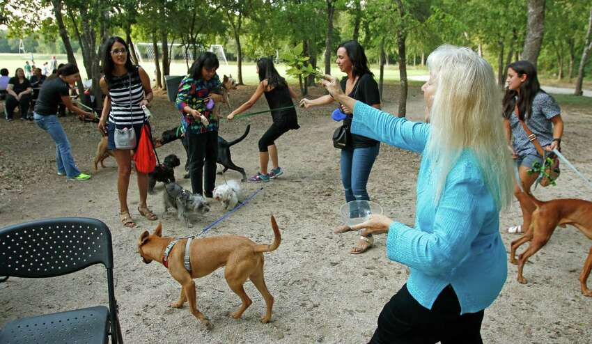 Sister Martha Ann ,CCVI, tries to do the blessing of a group of dogs who were not cooperating. The University of the Incarnate Word (UIW) invites the San Antonio community to the annual Blessing of the Animals celebrating the feast of St. Francis of Assisi on Thursday, Oct 1,2015.