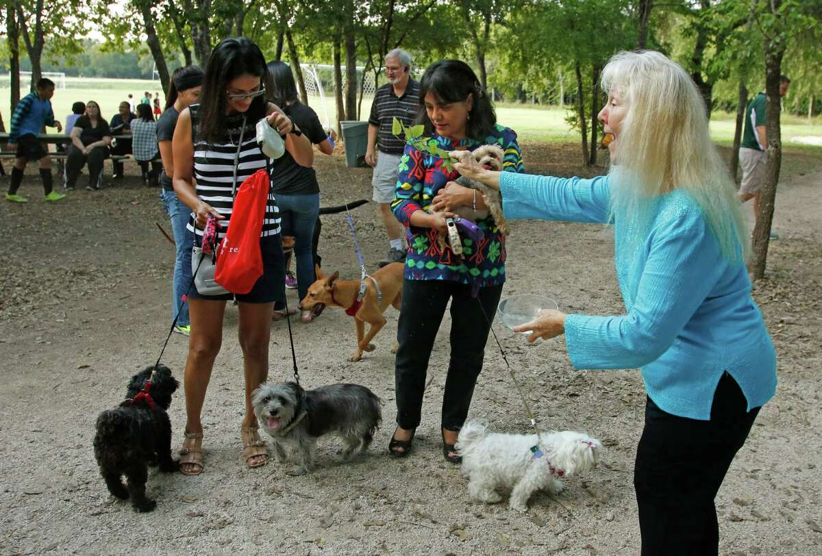 Sister Martha Ann ,CCVI, tries to do the blessing of a group of dogs The University of the Incarnate Word (UIW) invites the San Antonio community to the annual Blessing of the Animals celebrating the feast of St. Francis of Assisi on Thursday, Oct 1,2015.