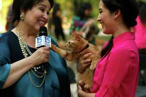 Blanca Martinez's cat Boots, being the only animal other than a dog being interviewed by Elizabeth Ruiz with catholic station 15ctsa.  Boots was not bashful as she took a liking to the mic. The University of the Incarnate Word (UIW) invites the San Antonio community to the annual Blessing of the Animals celebrating the feast of St. Francis of Assisi on Thursday, Oct 1,2015.