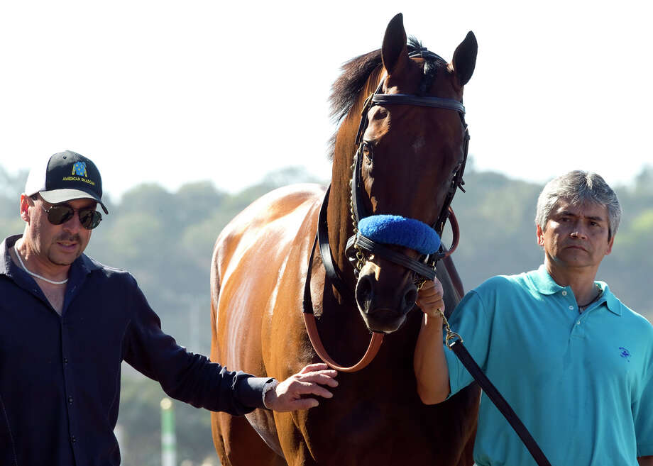 In this image provided by Benoit Photo, Triple Crown champ American Pharoah makes a special guest appearance between races Sunday, Sept. 6, 2015 at Del Mar Thoroughbred Club in Del Mar, Calif. (Benoit Photo via AP) ORG XMIT: ARC201 / Benoit Photo