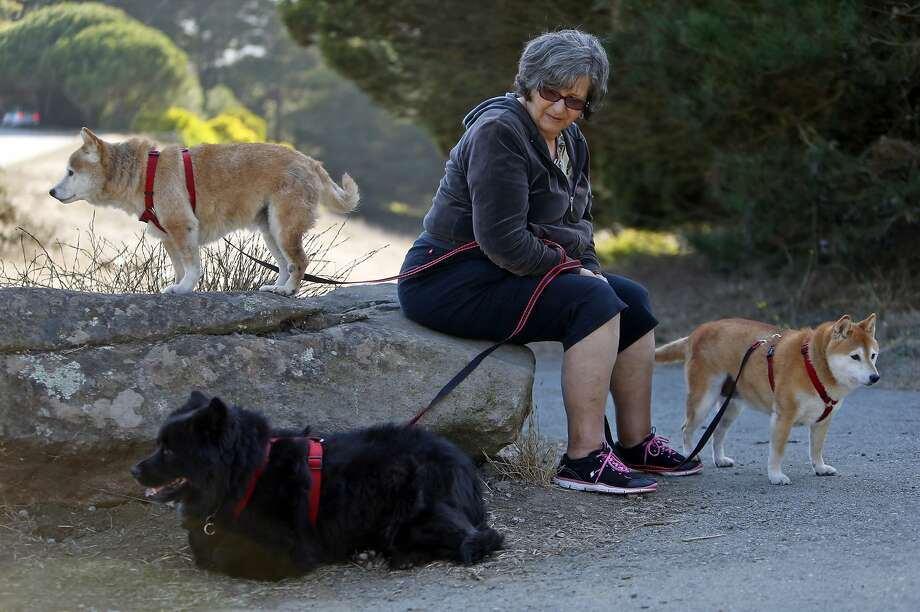 Rosie Damante with her dogs Freddie (left), Hope (bottom) and Ginger (right) at McLaren Park in San Francisco, Calif., on Sunday, October 4, 2015. Photo: Scott Strazzante, The Chronicle