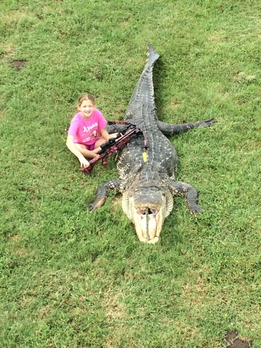 He said the gator was baited and hooked in the middle of the river with a log and rope.