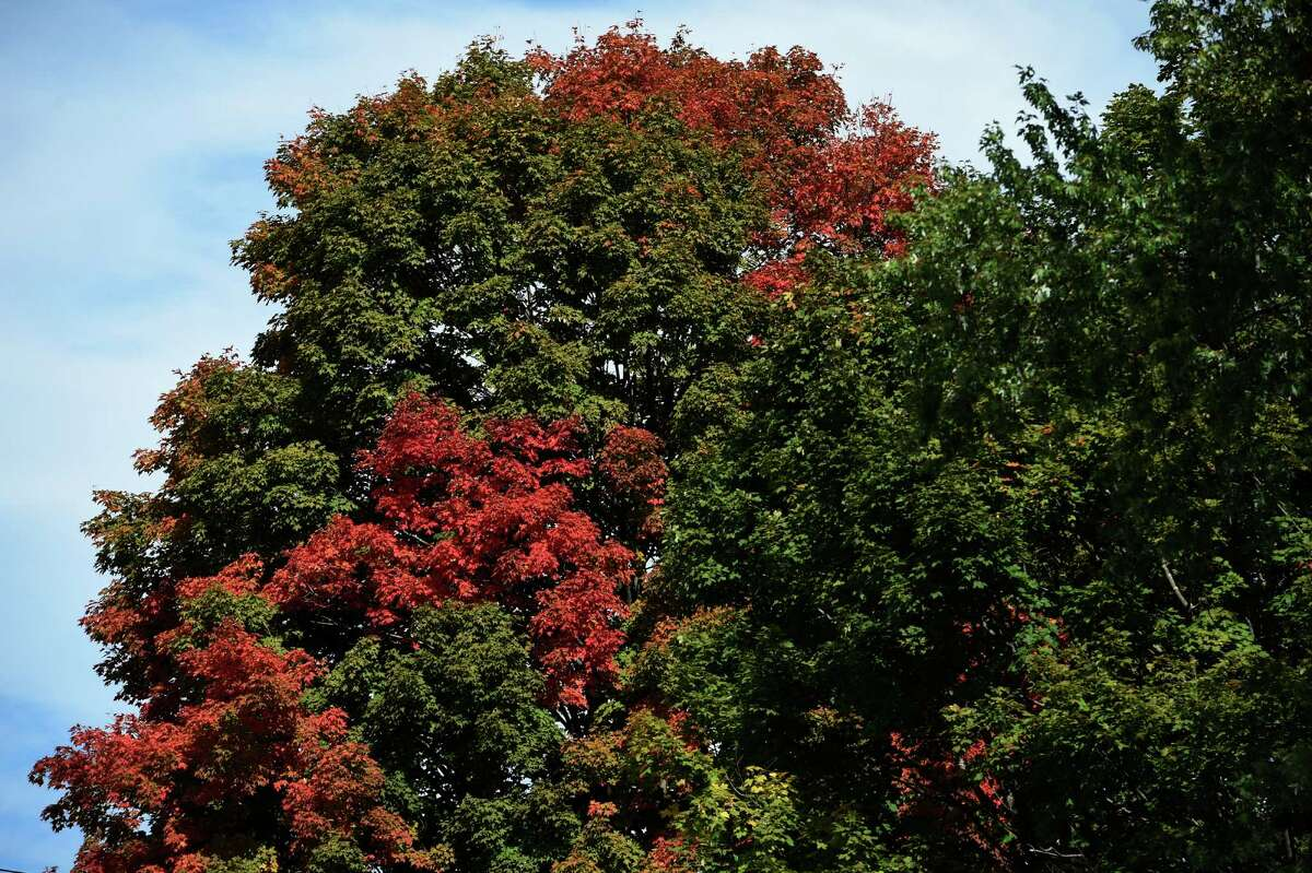 Trees are beginning to change near Crandall Park Monday Oct. 5, 2015 in Glens Falls, N.Y. (Skip Dickstein/Times Union)