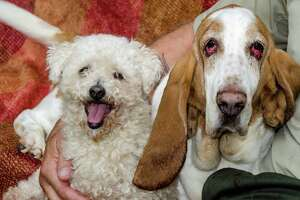 Pet of week: Stella and Gracie - Photo