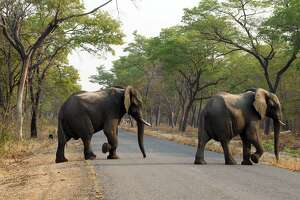 14 elephants killed by cyanide poisoning in Zimbabwe - Photo