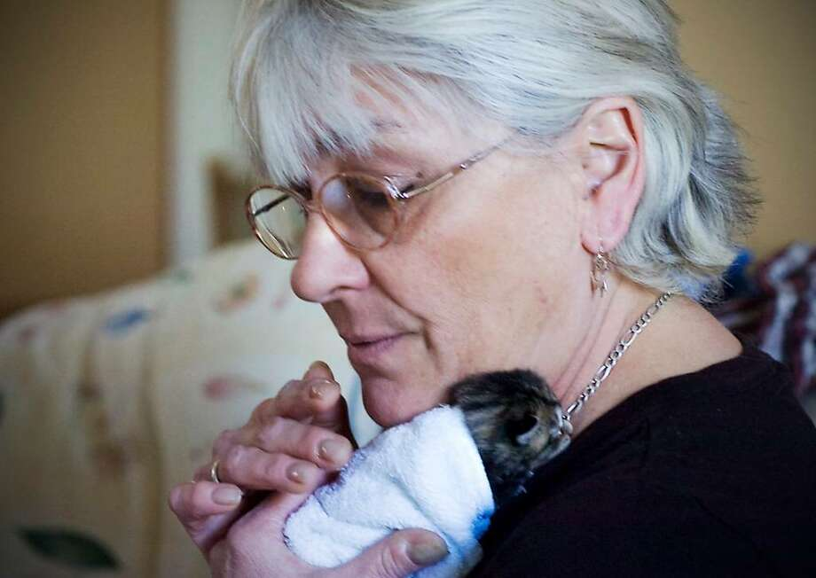 Cora Martino nurses a feral tiger kitten born on Sunday, March 21 in her home in Stamford, Conn. on Wednesday, March 24, 2010. Photo: Kathleen O'Rourke / Stamford Advocate