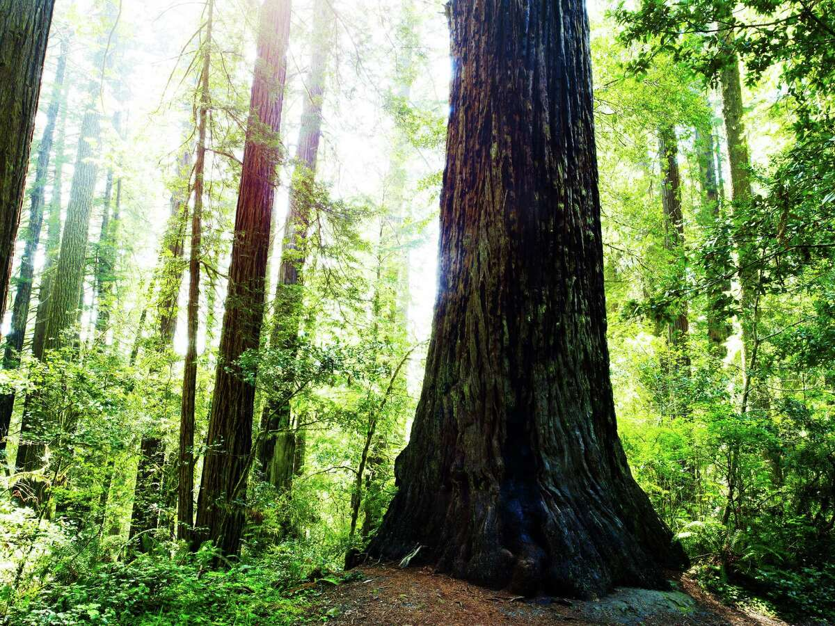 """California - The Mighty General Sherman """"Feel the majesty of the redwood forests at the foot of the world's largest tree-nicknamed General Sherman, located in Sequoia and Kings National Parks."""" - Yahoo Travel"""