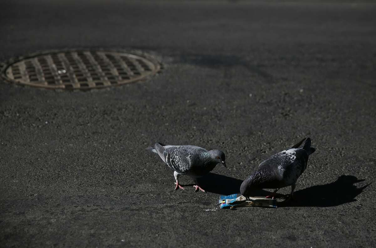 Pigeons fight over a piece of trash in the street on 6th and Minna Streets Oct. 6 2015 in San Francisco, Calif.