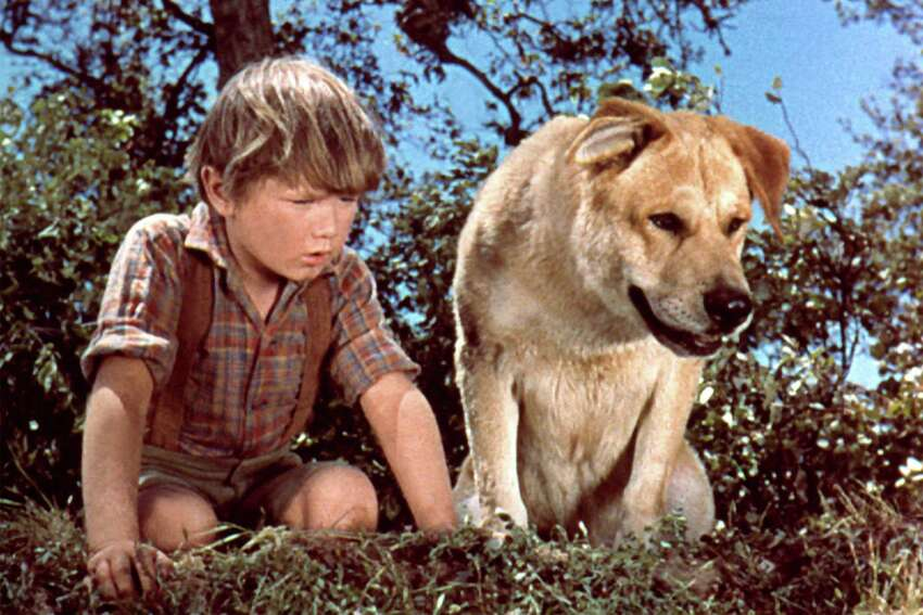 Old Yeller (1957) All dogs should watch this classic, but maybe turn it off before the ending. Photo Credits: Everett Collection