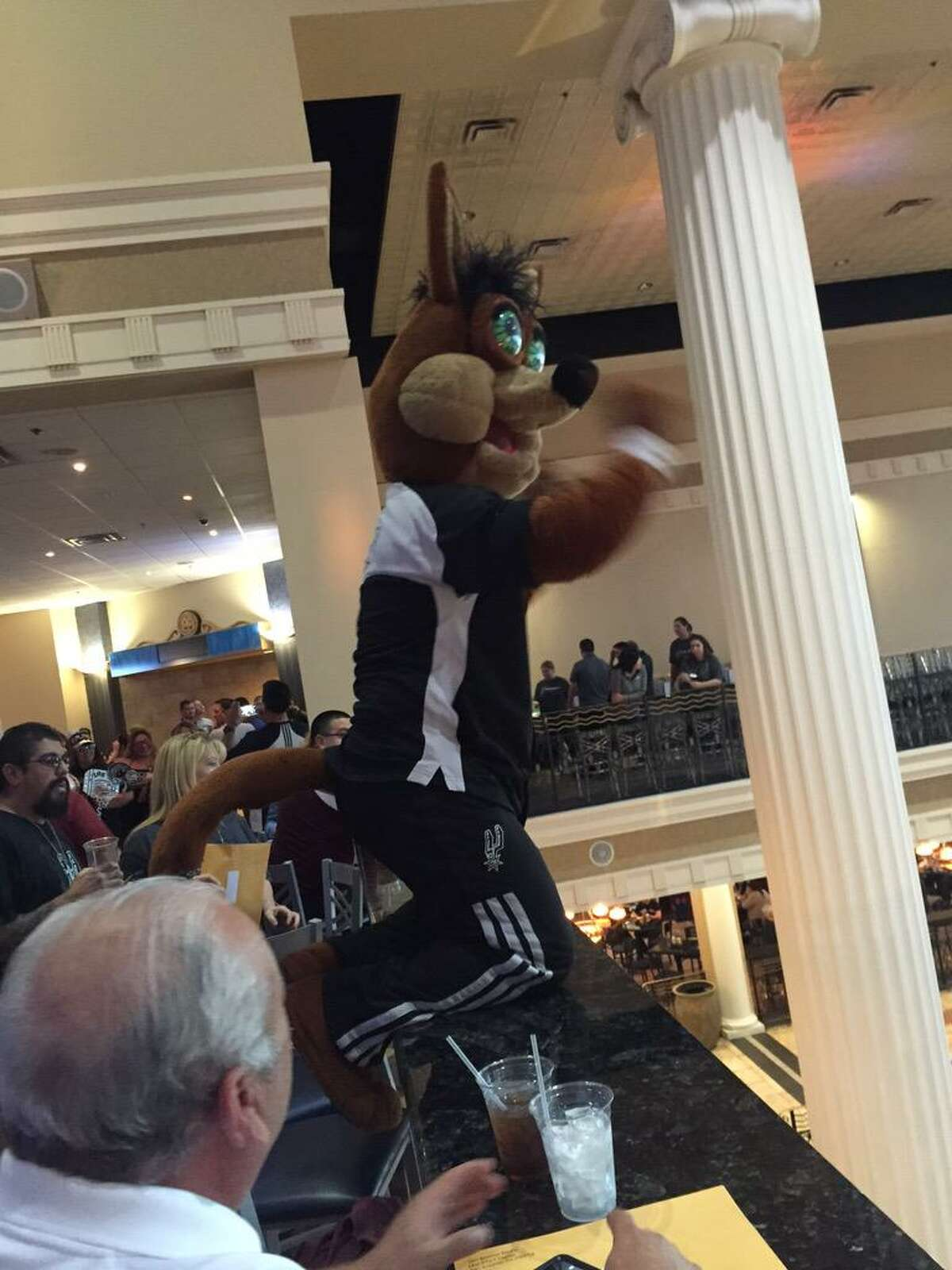 The Spurs Coyote proved any time and any place can be the prime time to party, even in the middle of the week on top a bar inside the Palladium Theatre.