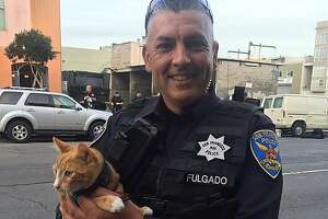 Cat helps S.F. cops talk suicidal man off building ledge - Photo