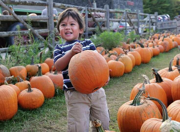 Jayden Bordeau, 7, of Schenectady picks out a pumpkin at Indian Ladder Farms on Thursday, Oct. 8, 20