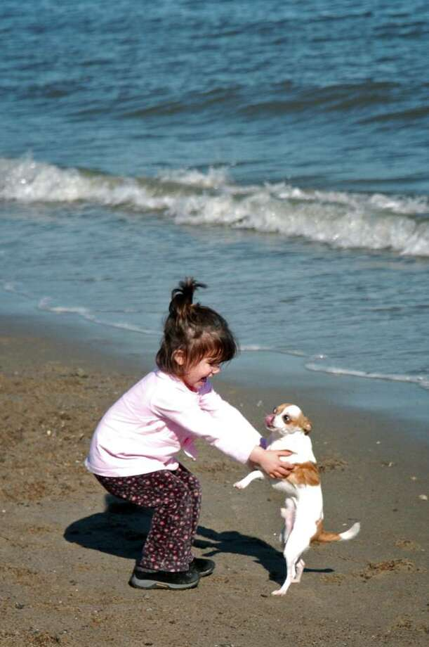 Three-year-old Luca DeMassa, of Trumbull, makes a new friend in Chihuahua Chuya Tuesday Mar. 16, 2010 at Jennings Beach in Fairfield. Photo: Autumn Driscoll / Connecticut Post