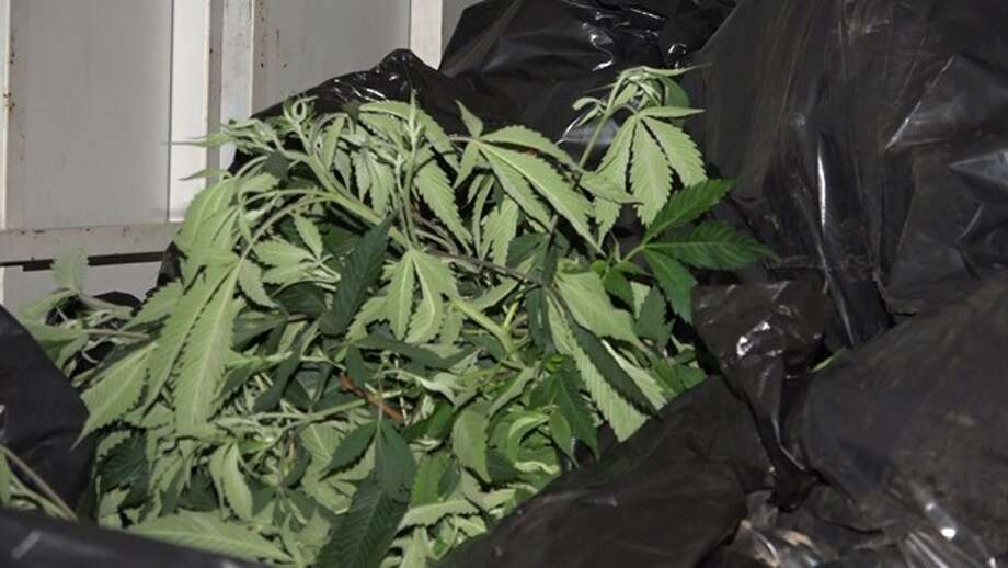 Authorities seized more than $60,000 cash and about 100 pounds of dried and bagged marijuana from a multi-million dollar marijuana grow operation in Montgomery County, Oct. 9, 2015, according to the Montgomery County Police Reporter. Photo: Montgomery County Police Reporter