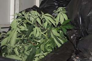 Cops bust huge marijuana operation in Montgomery County, seize cash, weapons - Photo