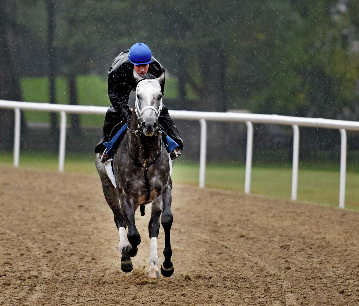 Exercise rider Rob Massey guides Stakes winner Frosted around the all weather training track at the Darley Training Center Friday morning Oct. 9, 2015 in Saratoga Springs, N.Y. (Skip Dickstein/Times Union)