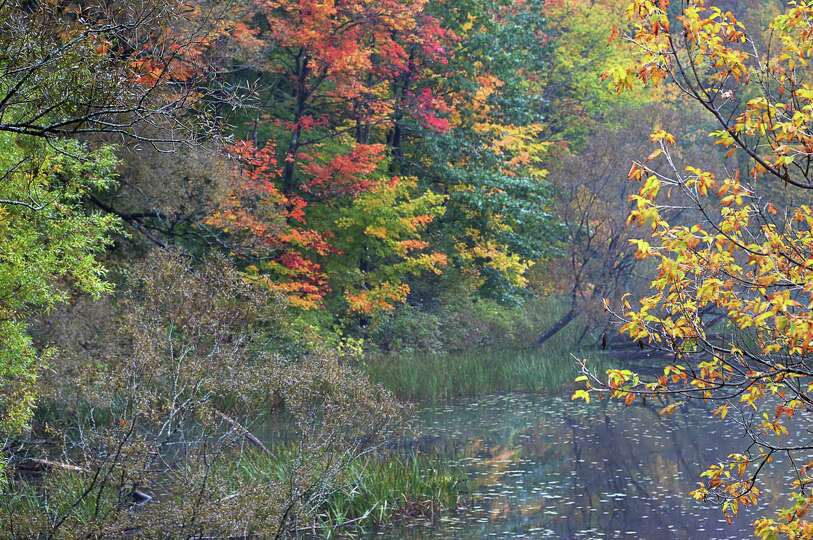 Fall foliage on a rainy afternoon at Watervliet Reservoir Friday Oct. 9, 2015 in Guilderland, NY.  (