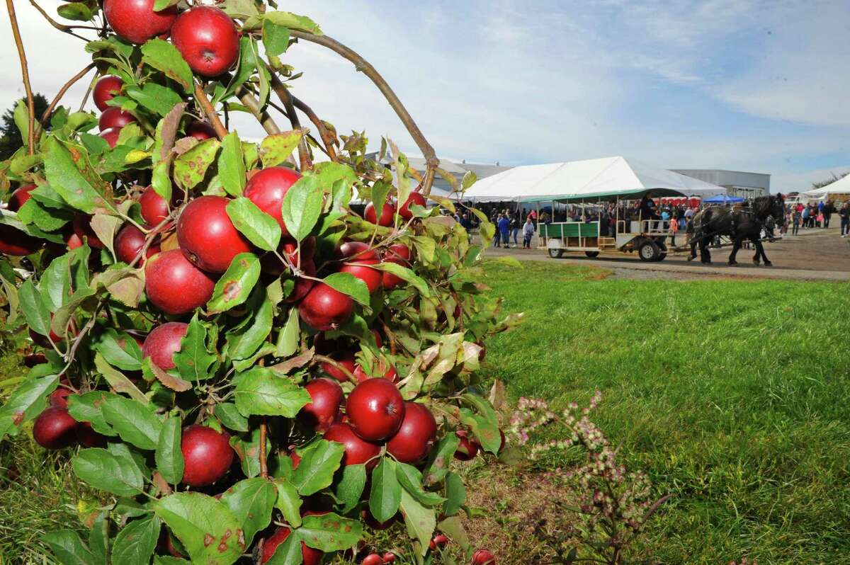 Goold Orchards 27th Annual Apple Festival & Craft Show on Saturday Oct. 10, 2015 in Castleton, N.Y. (Michael P. Farrell/Times Union)