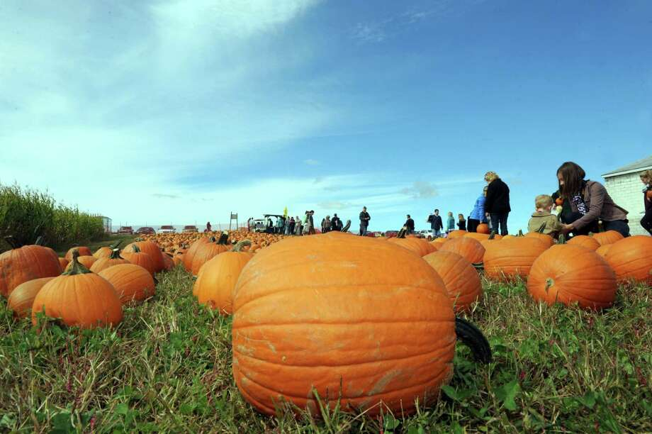 Nothing but blue skies above the pumpkin patch during Goold Orchards 27th Annual Apple Festival & Craft Show on Saturday Oct. 10, 2015 in Castleton, N.Y.  (Michael P. Farrell/Times Union) Photo: Michael P. Farrell / 10033644A