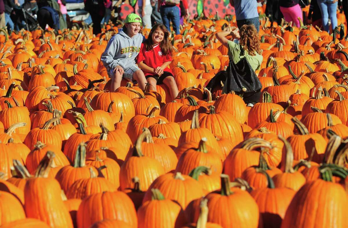 Taking a break from picking pumpkins Tammy Silva, of Monroe, snaps photos of her kids Michael Halko, 13, and Gianna Silva, 10, while at Jones Family Farms' Pumpkinseed Hill Farm off of Beardsley Road in Shelton, Conn. on Saturday October 10, 2015. The farm will be open daily from 10 a.m. to 5:30 p.m. through October 31st.