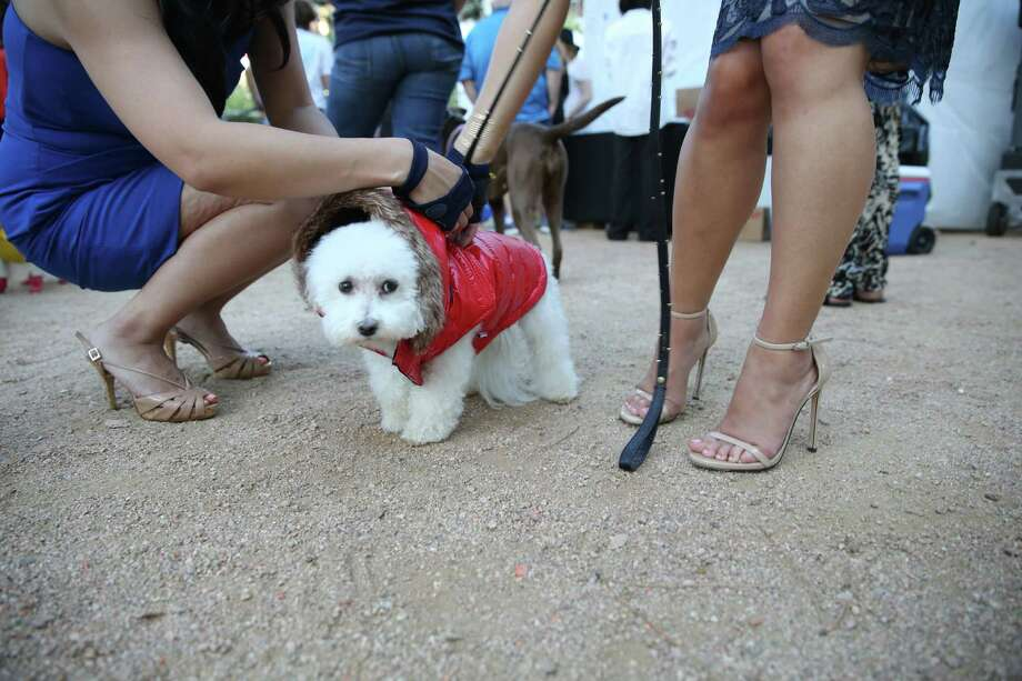 Models and canine strut runway houston chronicle for A family pet salon