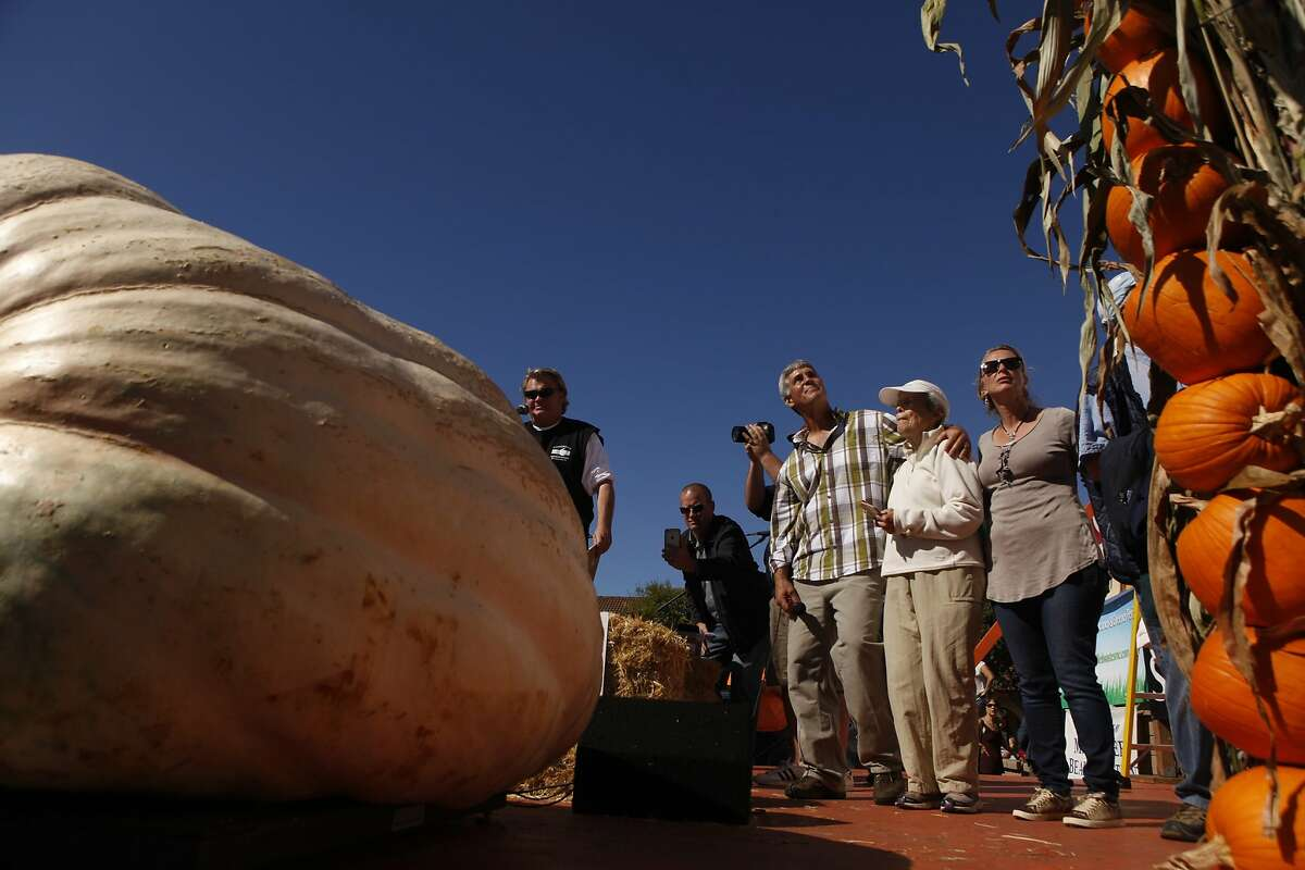 From left, Steve Daletas watches the scale with his mother Jeanette, and wife Susie of Oregon as his pumpkin is weighed during the 42nd annual Half-moon Bay Championship Pumpkin Weigh-off Monday morning October 12, 2015 in Halfmoon Bay, Calif. Daletas' pumpkin weighed in at 1,969 pounds winning the competition.