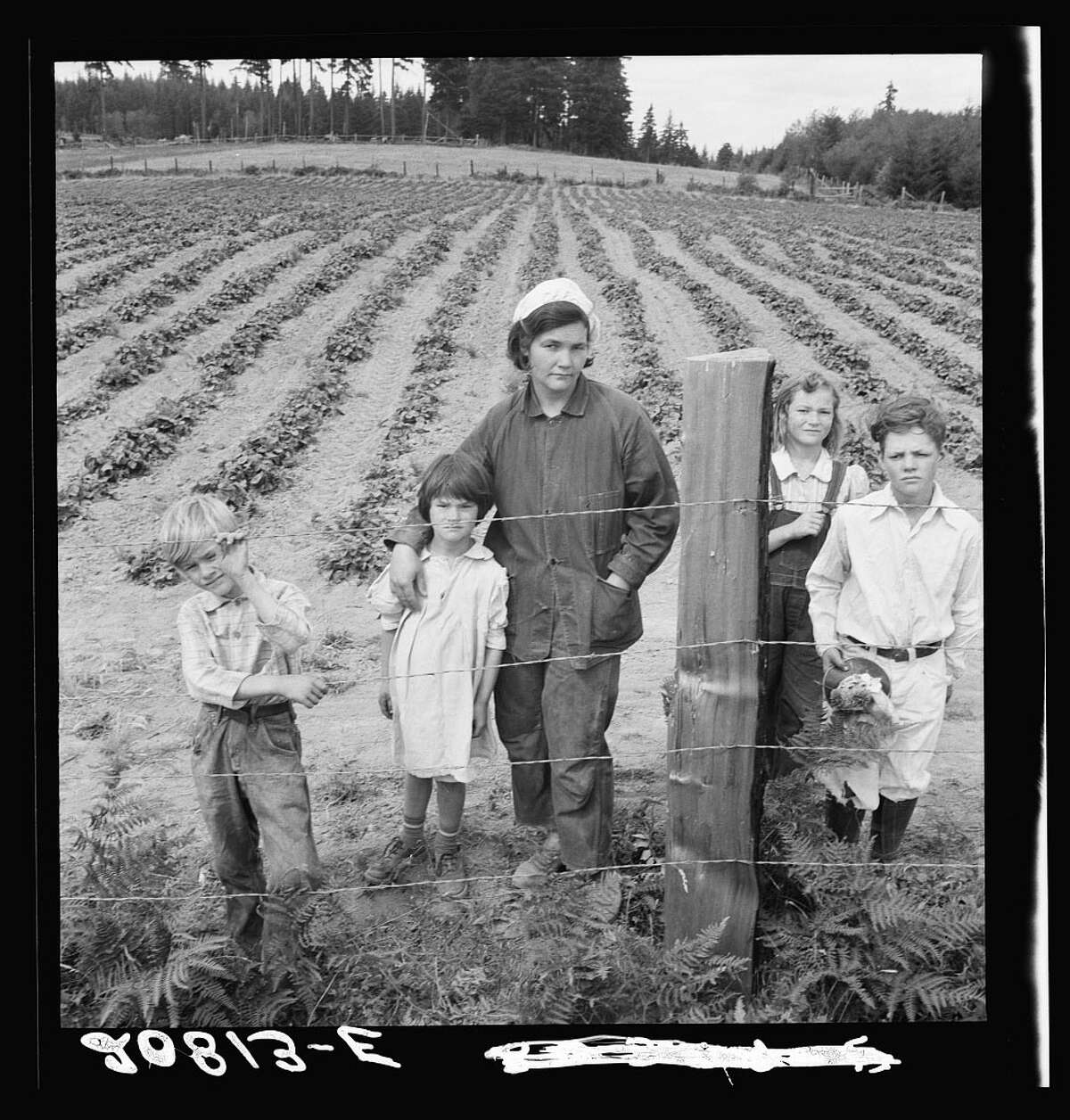 Original caption: The Arnold children and mother on their newly fenced and newly cleared land. Note strawberry plants. Western Washington, Thurston County, Michigan Hill. Photo by Dorothea Lange, August 1939.