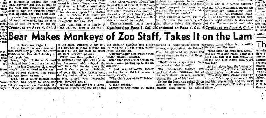The elusive Pokey the bear was front page news in The Chronicle on Jan. 4, 1949.