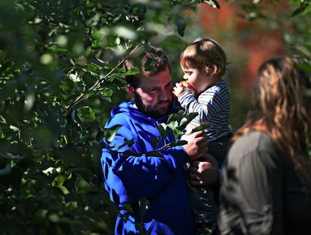 Twenty month old Hunter Royal takes a bite out of an apple that he picked from a tree while  in his father Andrew's arms Monday afternoon, Oct. 12, 2015, at Bowman Orchards in Rexford, N.Y. (Skip Dickstein/Times Union) Photo: SKIP DICKSTEIN / 10033728A